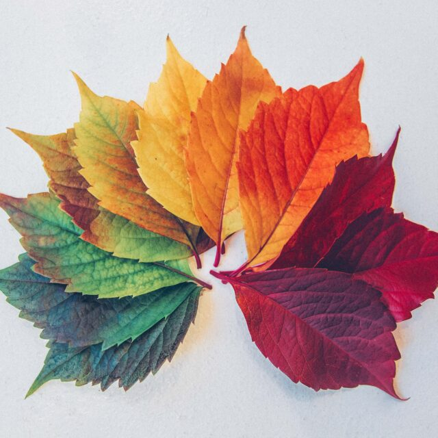 Leaves laid out like the color of a rainbow